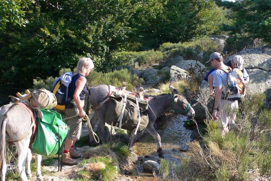Mont Lozère mit Packeseln - Wanderung