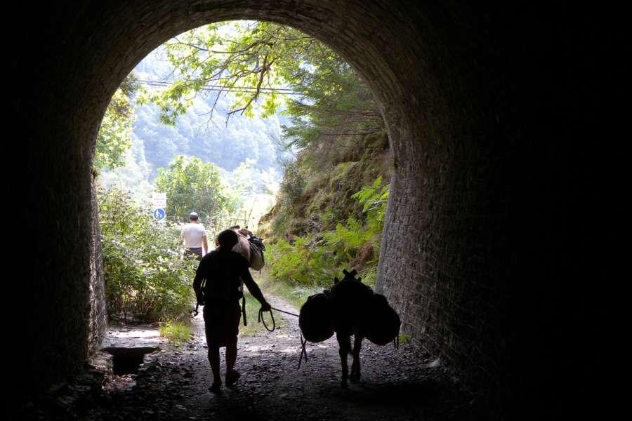 Familienfreundliche Wandertour mit »Langohren« - Wanderung