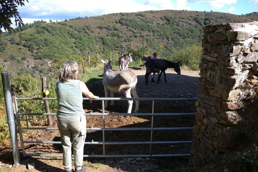 Einführung ins Eselwandern - Wanderung