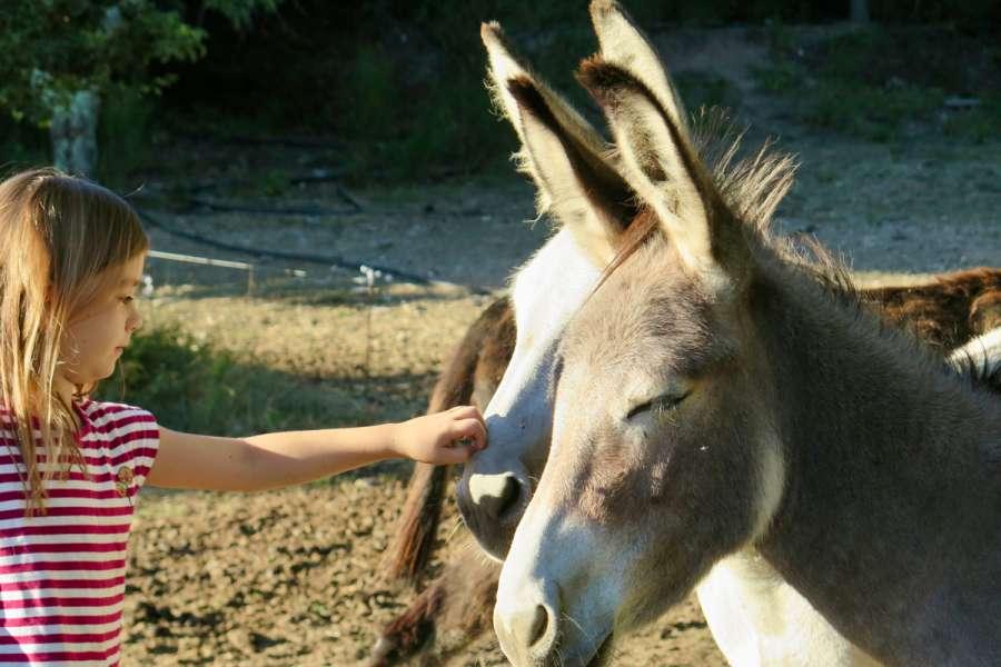 Familienfreundliche Eselwanderung in den südlichen Cevennen - Wanderung
