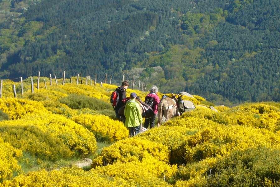 Cevennen, Eselwanderung mit Komfort - Unterkunft