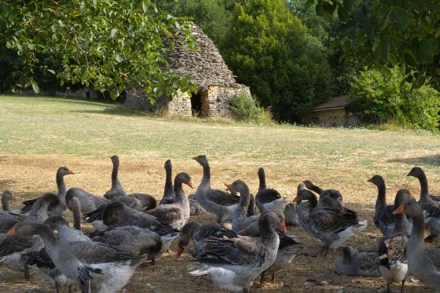 Wanderreise Périgord Noir & Dordogne - Wanderung